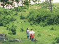 Trekking d'Ogliastra
