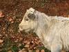 fauna di Ogliastra