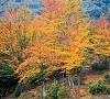 colori d'autunno nelle campagne di Ziano Piacentino